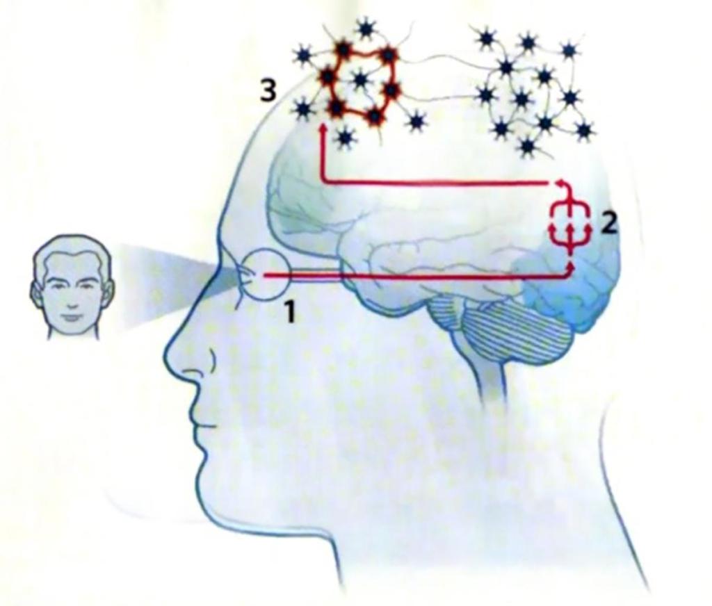 Gehirn-Bild4