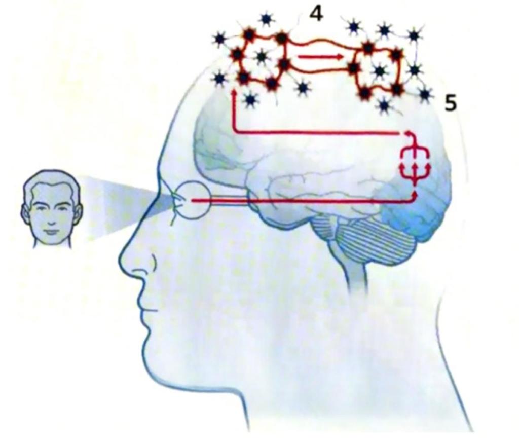 Gehirn-Bild3