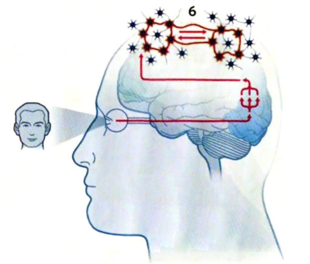 Gehirn-Bild2