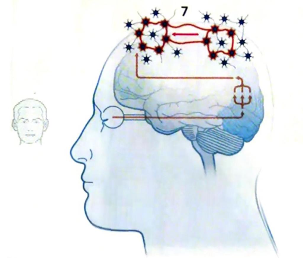 Gehirn-Bild1